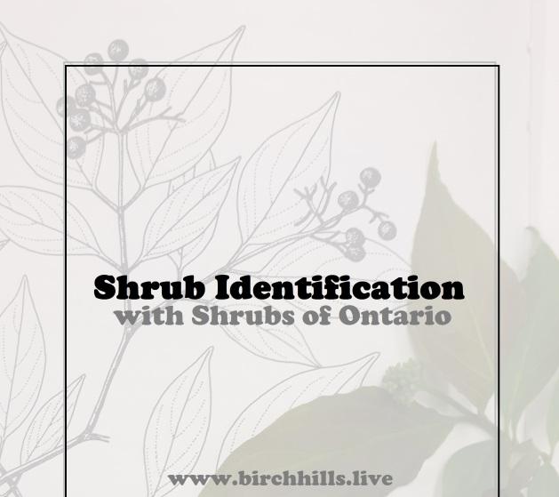 Shrub ID
