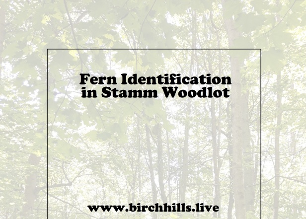 FERN ID SW COVER