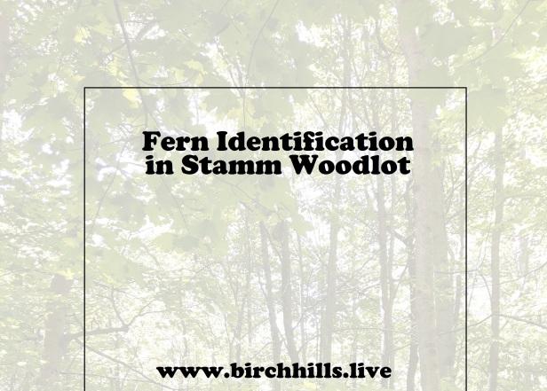 FERN ID SW COVER
